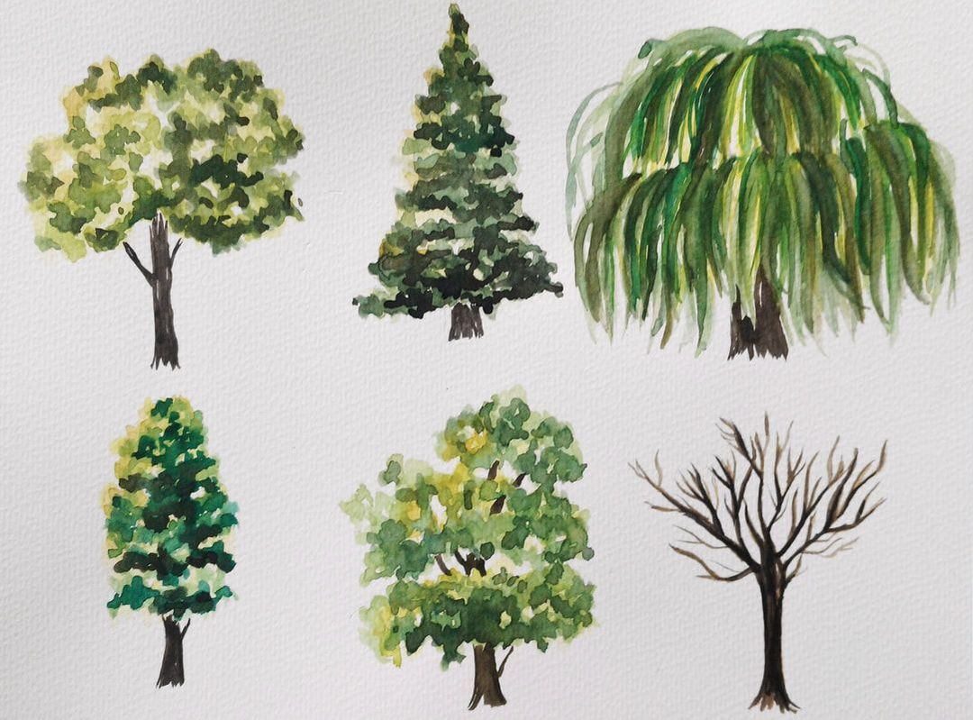 Watercolor tree studies