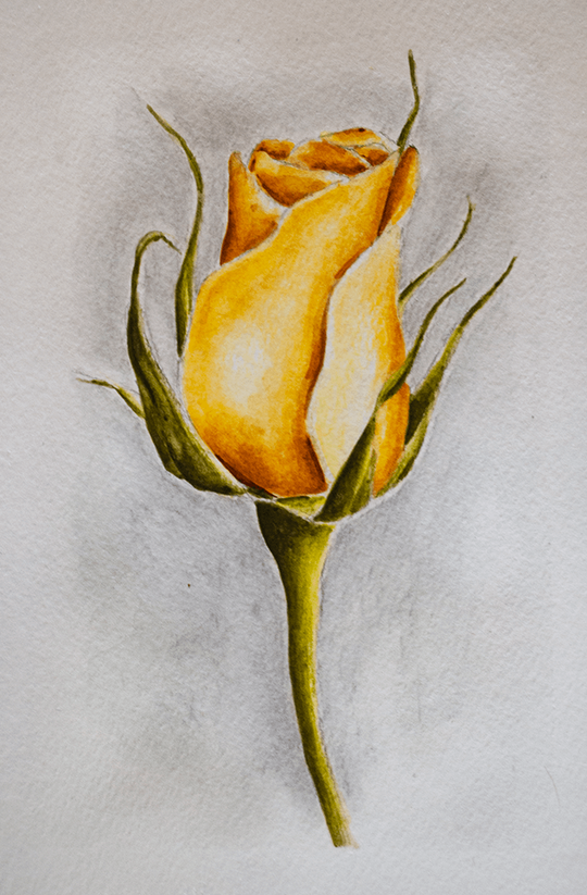 Watercolor Pencil Rose by Erika Lancaster