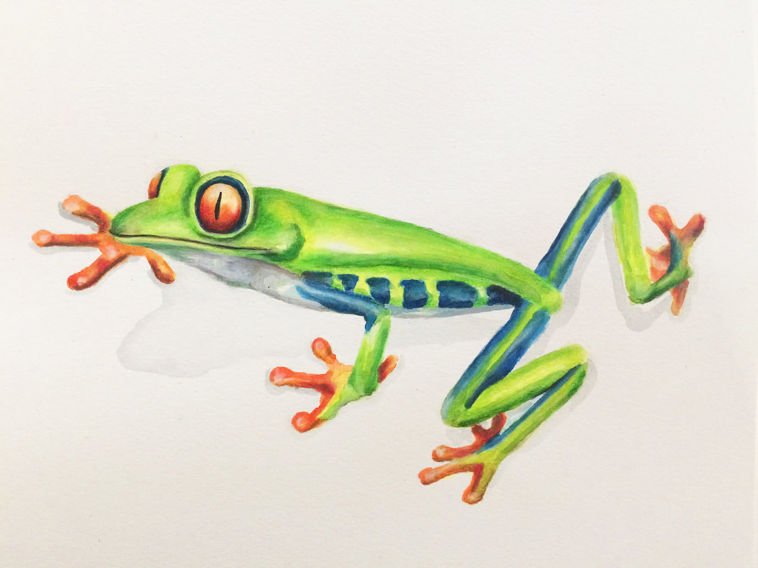 Mixed- Media Red Eyed Frog by Erika Lancaster